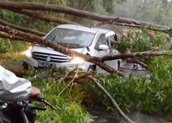 mobil yang tertimpa pohon tumbang